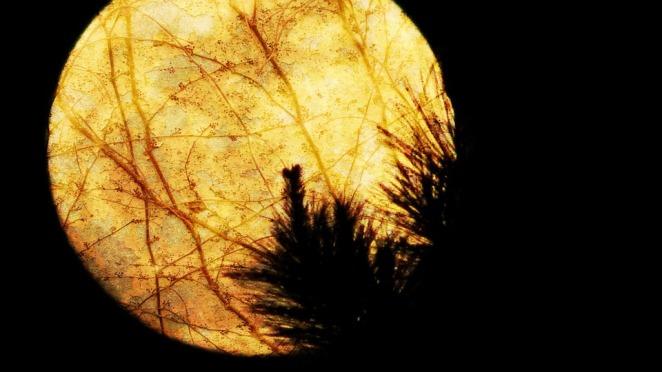 moon-26076_960_720